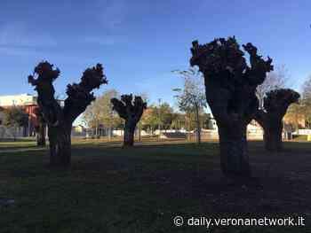 """Nato a Caldiero il """"bosco dei gelsi"""" per salvare i """"morari"""" - Daily Verona Network - Daily Verona Network"""