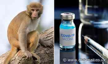 Novavax vaccine stops coronavirus spreading between monkeys