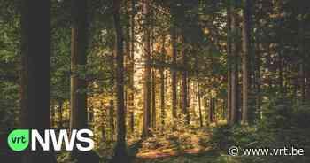 """Oost-Vlaanderen koopt bos in Geraardsbergen: """"We planten extra bomen en zorgen voor wandelpaden"""" - VRT NWS"""