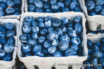 Blueberry muffins glazed with lemon icing – Bundaberg Now - Bundaberg Now