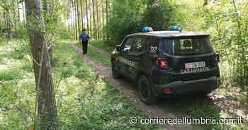 Orvieto, trovati tre cani morti in una zona di campagna: l'ipotesi è che siano stati strangolati - Corriere dell'Umbria