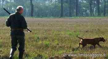 Tre cani da caccia trovati morti nelle campagne intorno a Orvieto. Indaga la procura di Terni - Il Messaggero