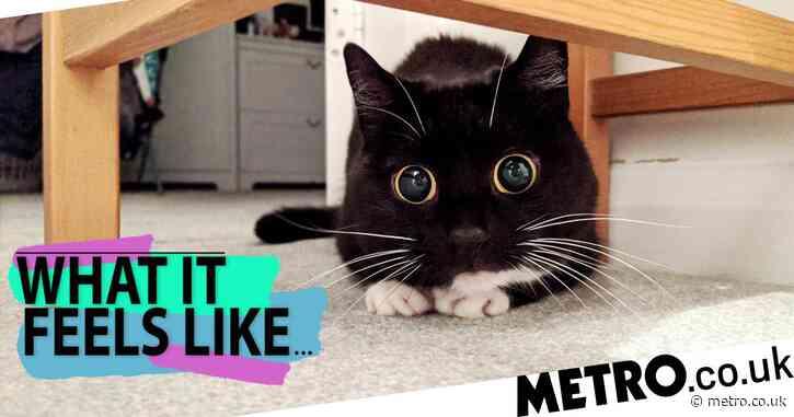 My cat has more followers on social media than I do