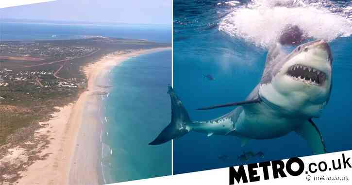 Man killed in shark attack just 30 metres from beach