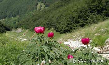Chieti, la Flora del Parco Nazionale della Majella - Tg Roseto