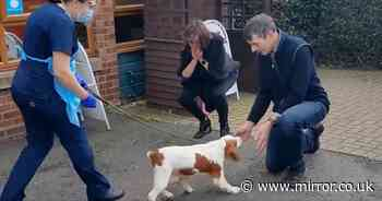 Couple reunited with their adorable dog - six years after she was stolen