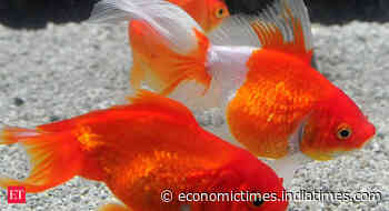 Fisheries sector can attract USD 9 billion investment in 5 years: Official - Economic Times