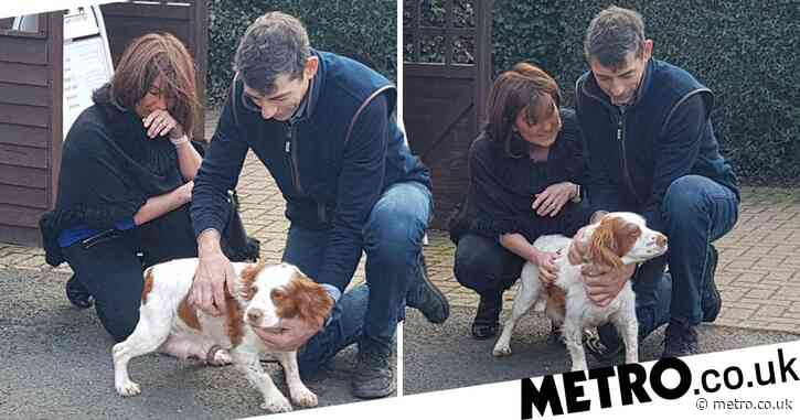 Dog stolen six years ago and forced to breed is reunited with family