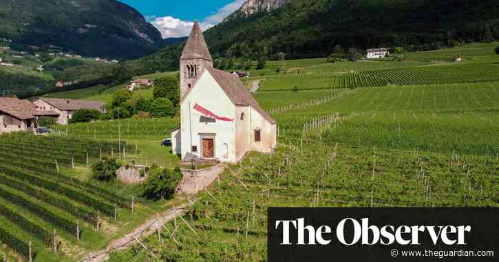 Pinot grigio or gris – what's in a name? | David Williams