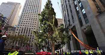 Rockerfeller Center hits back after hundreds shame the 'terrible' Christmas tree