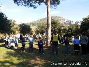 """Terracina / Legambiente celebra la """"Festa dell'albero"""" in versione digitale - Temporeale Quotidiano"""