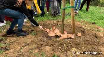 Un nuovo polmone verde a Cattolica: in arrivo oltre 2500 alberi - AltaRimini