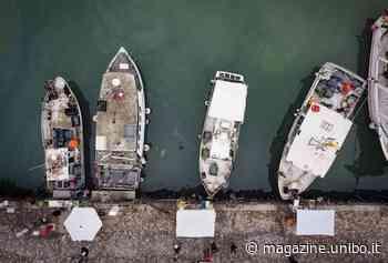 Navi da pesca all'opera a Cattolica per la raccolta dei rifiuti marini - UniboMagazine
