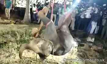 Elephant is successfully hauled out of a well in India after 14-hour rescue operation