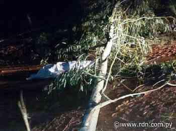 Hombre muere aplastado por un árbol en Arroyos y Esteros - Resumen de Noticias