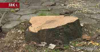Autarquia de Aveiro diz que abate de 80 árvores é uma questão de segurança - SIC Notícias