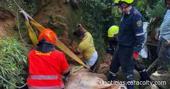 Así fue el complejo rescate para poner a salvo un toro de 600 kilos que cayó a un caño - Noticias Caracol