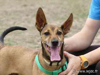 Adoptez-le ! - Spike, un petit chien au caractère vif et jovial, aimerait trouver une gentille famille - Le Journal du Centre