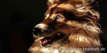 Unfall in Bad Gandersheim: Autofahrer verletzt Hund und fährt davon - Göttinger Tageblatt
