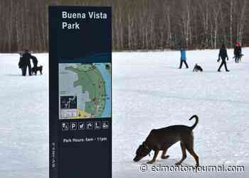 Poisonous red powder in Buena Vista dog park was used to mark race course, Edmonton police say