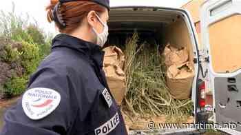Gignac-la-Nerthe : 61 kilos de cannabis saisis par la police - Maritima.Info - Maritima.info