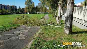 Tor Bella Monaca, crolla un albero sulla pista ciclabile