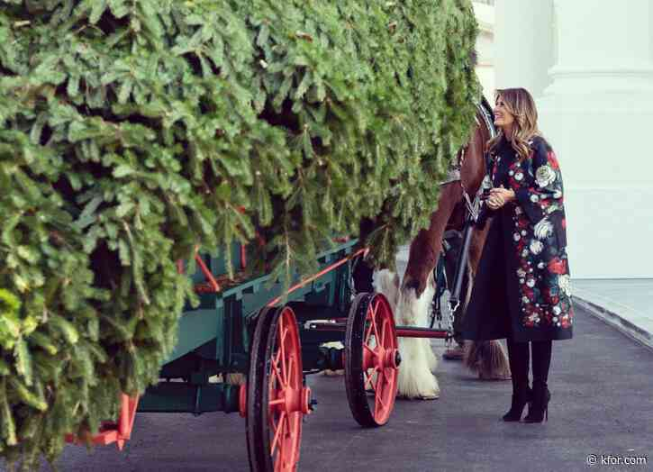 Holiday traditions underway in DC today: White House Christmas Tree, presidential turkeys