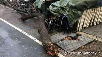 Pigneto, con la festa dell'albero scatta la raccolta fondi per il verde del quartiere