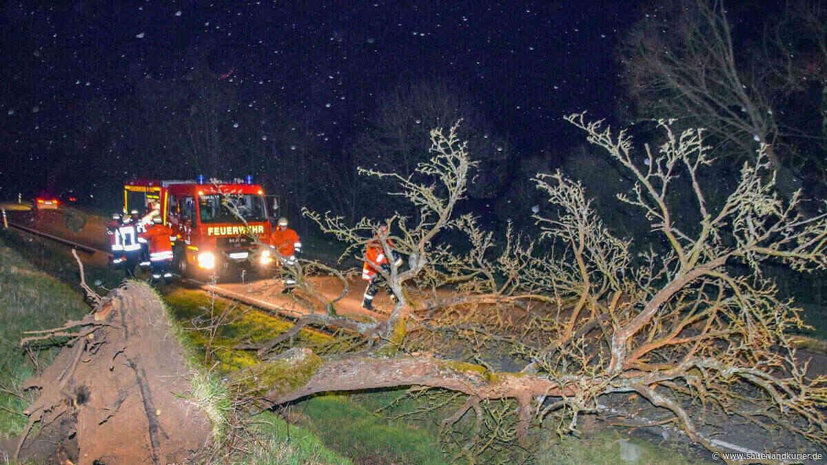 Baum stürzt um: Zwölfjähriger aus Haan lebensgefährlich verletzt - SauerlandKurier