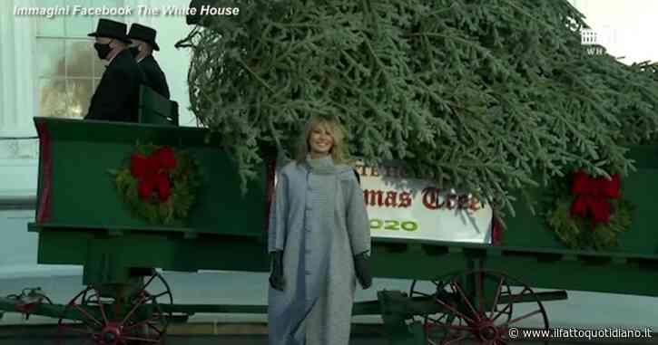 L'ultimo albero di Natale di Melania Trump: l'abete arriva su un carro trainato da due cavalli – Video