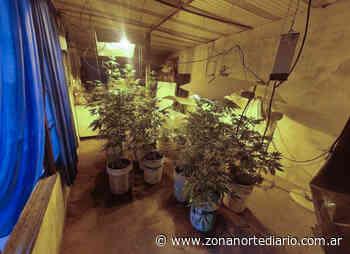 Secuestran 55 plantas de marihuana en un sótano en Los Polvorines donde funcionaba un invernadero - Zona Norte Diario OnLine