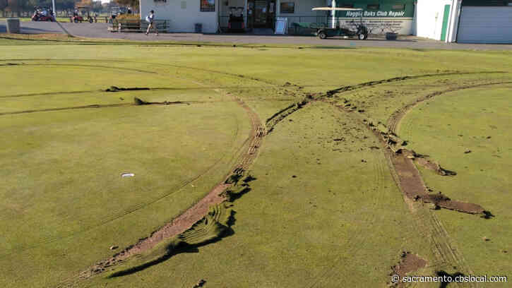 Vandal Drives Over The Greens At Arcade Creek Golf Course