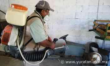 Blindaje contra mosco en Peto - El Diario de Yucatán
