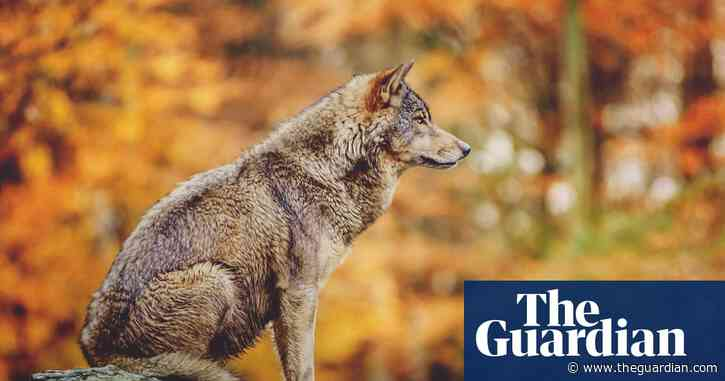 Landscape of fear: why we need the wolf