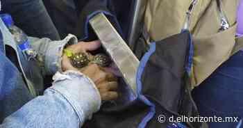 Conmueve hombre que alimenta a tortuguitas en el Metro y se hace viral - El Horizonte