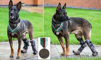 Medal for hero special forces dog who charged through a hail of gunfire to take out Al Qaeda sniper