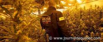 En Espagne, énorme saisie de 372 000 plants de cannabis