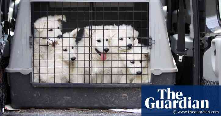 Eurotunnel dog travel clampdown sparks concerns from rescue charities