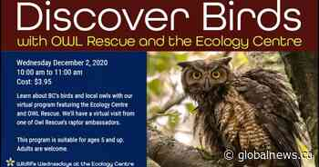 Discover Birds with Owl Rescue and the Ecology Centre
