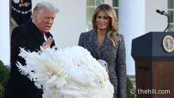 Trump addresses pandemic but not election during annual turkey pardon