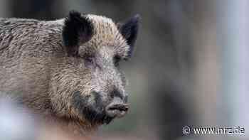 Wildschwein ausgewichen: Autofahrer aus Kleve im Krankenhaus - NRZ