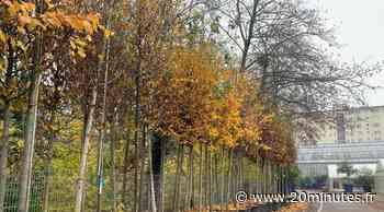 Où et pourquoi 700 arbres vont être plantés à Strasbourg - 20 Minutes