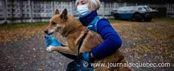 Distribution de nourriture pour des chiens errants sur la Côte-Nord