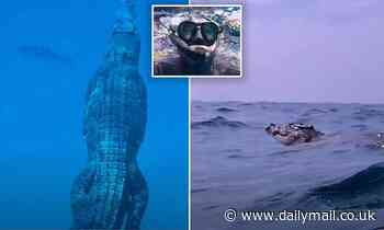 Freediver gets the fright of his life after spotting a giant saltwater crocodile on the ocean floor