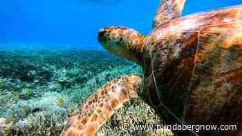 Turtle Hour returns after inaugural success – Bundaberg Now - Bundaberg Now