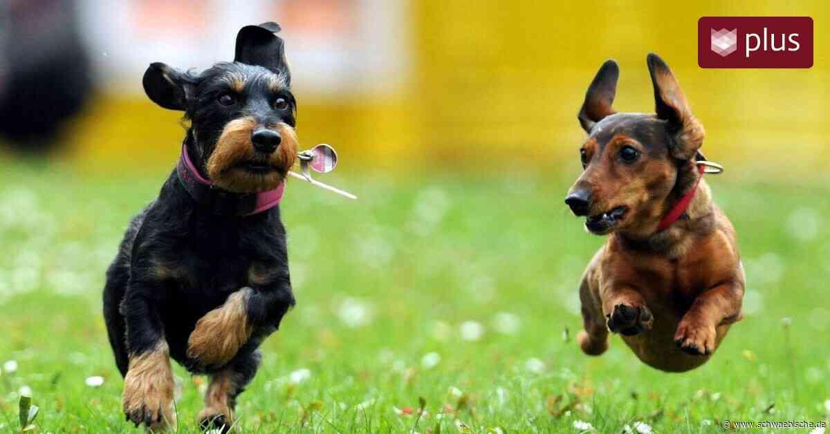 Lindau: Hundeverbot auf dem Gartenschaugelände - Schwäbische