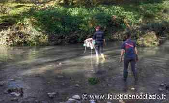 Cerveteri e Fiumicino, al via il monitoraggio delle microplastiche nei fiumi - Il Quotidiano del Lazio