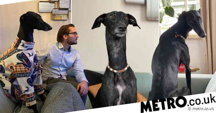 Dog with a remarkably long neck looks like a cross between a pooch and giraffe