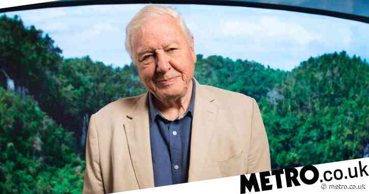 Sir David Attenborough's Instagram account is now inactive after breaking records on debut