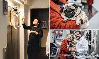 Pug is left hanging in the air after owner goes up in an elevator while her pet was still outside